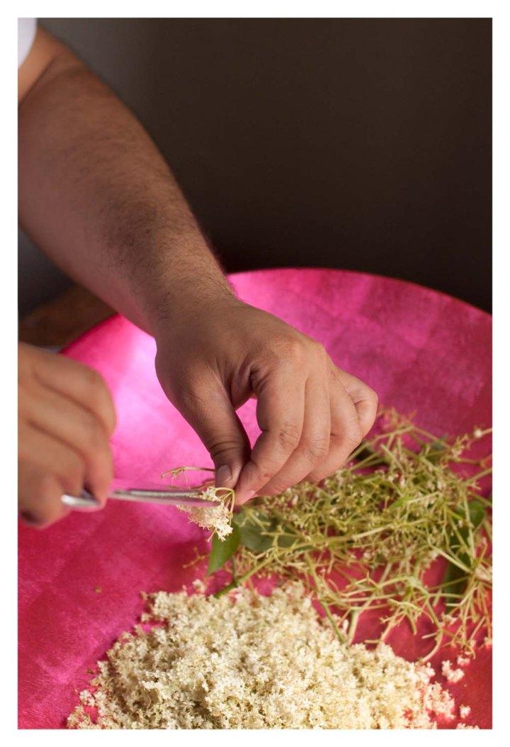 Cortando las flores de saúco